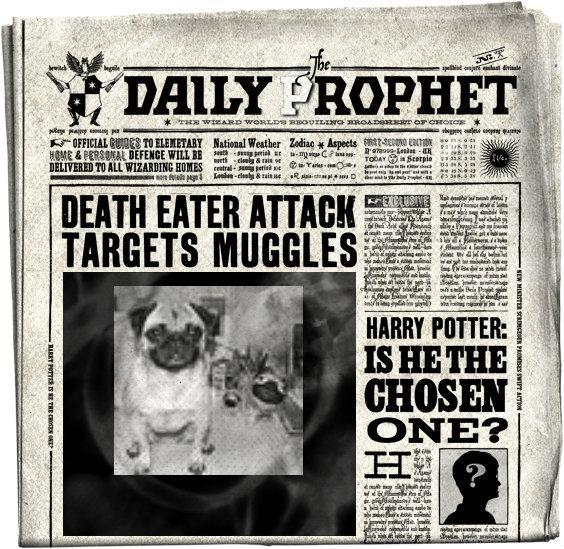 DailyProphet